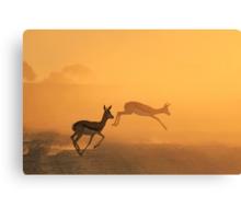 Springbok - African Wildlife Background - Beautiful Motion Canvas Print