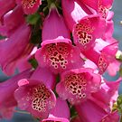 Foxglove ~ Also Known as Digitalis by SummerJade