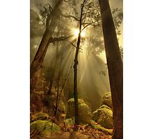 Afternoon mist, Mount Buffalo Photographic Print