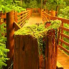 Bridge into the Woods by lorilee