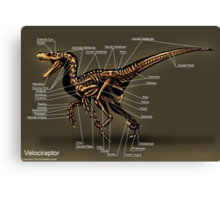 Velociraptor Skeleton Study Canvas Print