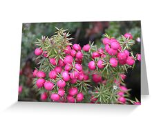 Pink Mountain Berries, Cradle Mountain, Tasmania, Australia. Greeting Card