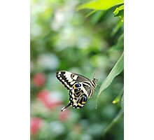 butterfly in green Photographic Print
