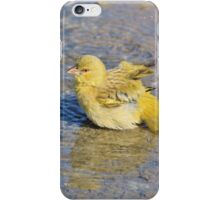 Masked Weaver - African Wild Birds - Happy Days iPhone Case/Skin