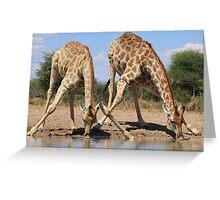 Giraffe - African Wildlife Background - Splitting for Sips Greeting Card