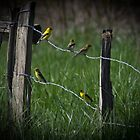 Goldfinch Gathering by photodug
