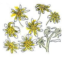 Manx #3 - Scruffy Yellow by Vicky Webb