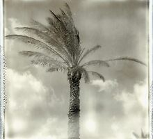 PALM TREE 3 by Nathan Pendlebury