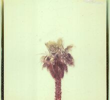 PALM TREE 2 by Nathan Pendlebury