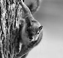 Mono Fox Squirrel by Keala