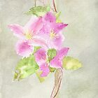 Clematis by rosie320d