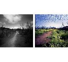 From destruction grows a garden of the soul: Photographs by J. M. Golding by J. M. Golding