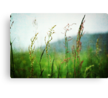 In the Meadow - JUSTART © Canvas Print