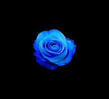 Blue rose by princessbedelia