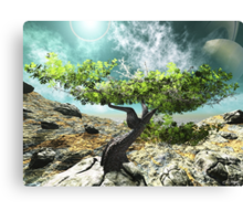 The last Tree Canvas Print