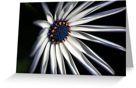 Brighten your Day - Daisy by Joy Watson