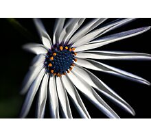 Brighten your Day - Daisy Photographic Print