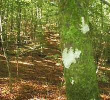 Forest 1 by Furiarossa
