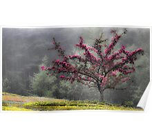 Apple Blossoms - Looking Back at the Beauty of Spring Poster