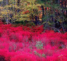 North Carolina Beauty by Mechelep