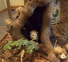 Possum Family by Suzanne Tineo