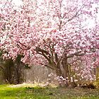 Tulip Tree in April by Pauline Evans