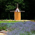*The Windmill Outhouse* by Darlene Lankford Honeycutt