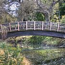 UC Davis Arboretum Bridge by Diego  Re