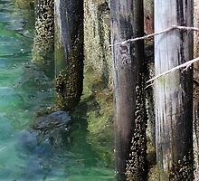 Seal Harbor Dock Pilings 3 by marybedy