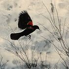 Red Wing Blackbird by Rosalie Scanlon