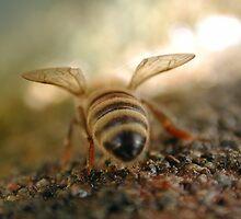 bee's bum by Matt Mawson