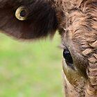 Aye, I see you by Georgie Hart