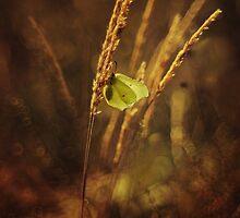 Golden grass by JBlaminsky