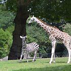 Zoo Friends by Dani LaBerge