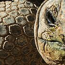 Tortoise by Linda Sparks