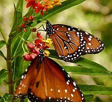 Butterflies in the Garden by Linda Gregory