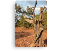 Old Tree 8 Colorado National Monument Canvas Print