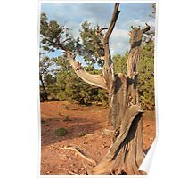 Old Tree 8 Colorado National Monument Poster