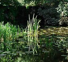 Reeds and Lily Pads, Calke Park by Rod Johnson