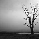 Tree in the Fog by Joel Bramley