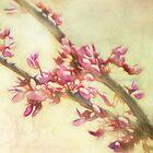 Fractalius Blossoms by vigor