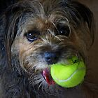 ANYONE FOR TENNIS by leonie7