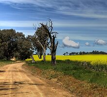 Through the Canola by GailD