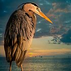 Great Blue Heron and Blue sunset by LudaNayvelt