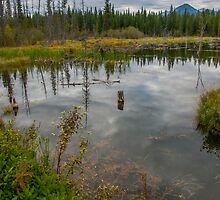 Forest Pond Near The Kicking Horse River in the Canadian Rockies by mspixvancouver
