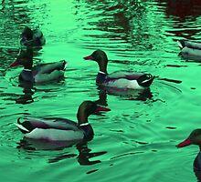 Duck Serenity  by Ian Briscoe