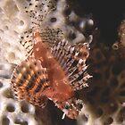 Sydney Marine Life by Erik Schlogl