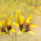 Lilycrest Gardens - Yellow and Brown by Marilyn Cornwell
