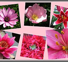 Pink Flowers of Summer Collage by BlueMoonRose
