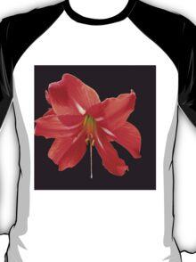 Scarlet Lily on Black Background T-Shirt